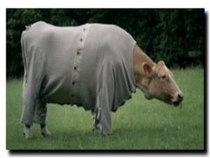 корова в пижаме