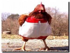 курица в одежде