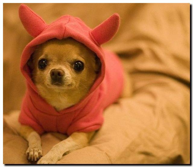 одежда для собак 01