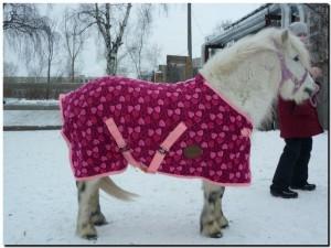 попона для пони