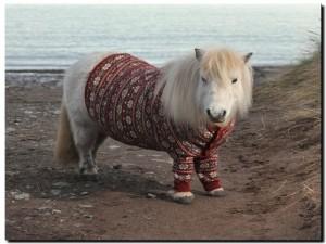 пони в свитере