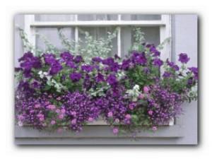 цветы за окном
