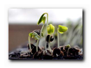 проростки цветов