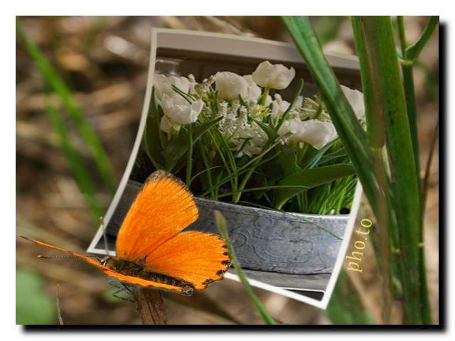 луковичные цветы весна
