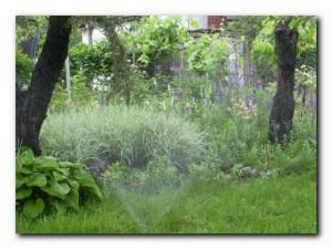 спасти сад от жары