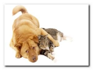 как дружат животные