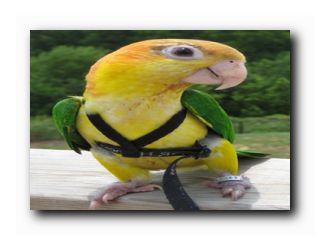 все для попугаев