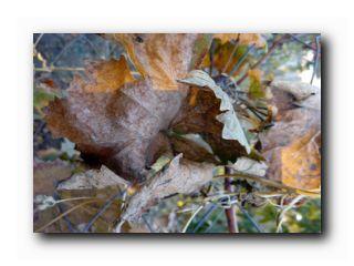 уход за виноградником осенью
