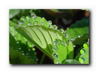 какие растения предсказывают погоду