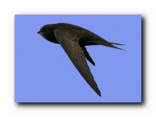 приметы погоды по птицам