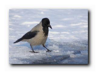 птицы и погода