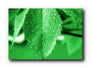 растения синоптики