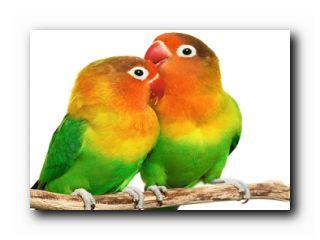 как выбрать птицу
