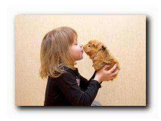 коротко о животных для детей