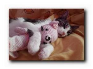 на лежанке дремлет кот