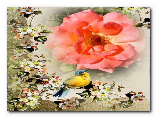 жизнь садовода розы
