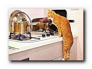 еда для кошек