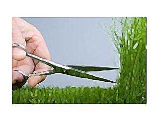 июнь садовода газон
