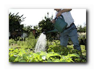 год садовода чапек июль