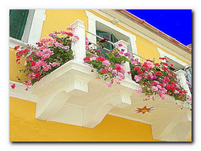 флора оконная и балконная