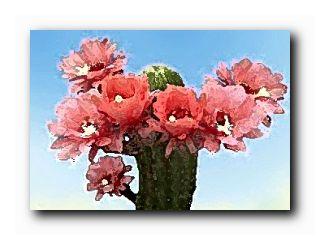 любитель кактусов
