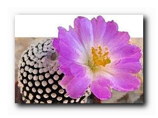 о любителях кактусов