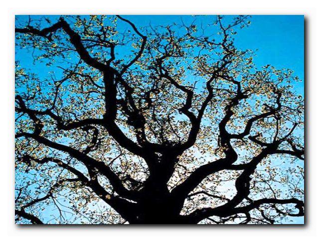 октябрь деревья