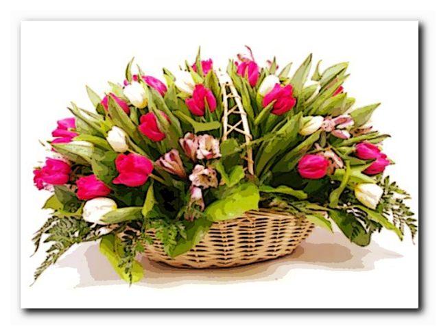 купить тюльпаны минске