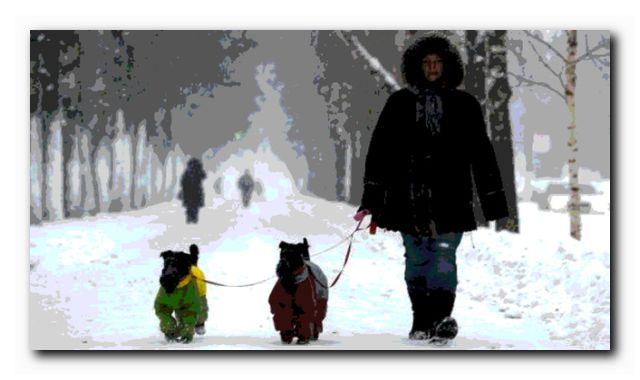 лучшая зимняя прогулка