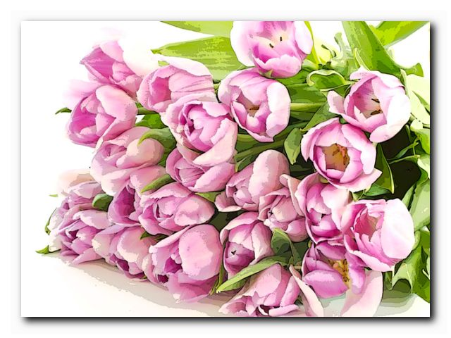 тюльпаны беларусь