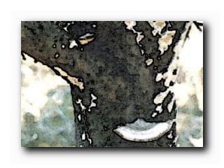 гриб трутовик дерево