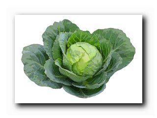 чем удобрять овощи