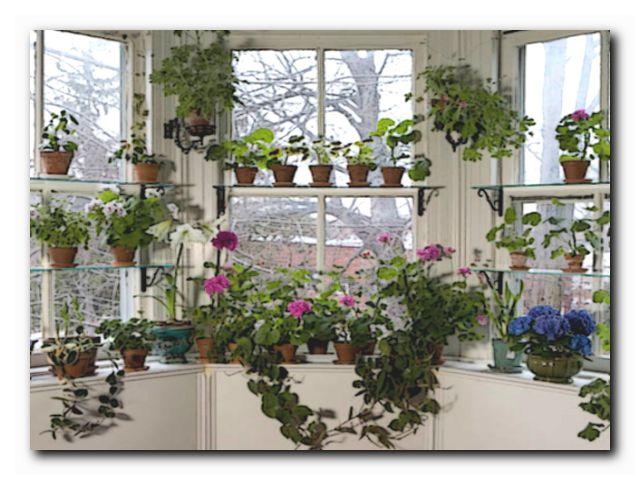 цветоводство в домашних условиях