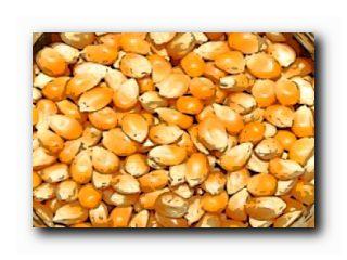 семена Лимагрен