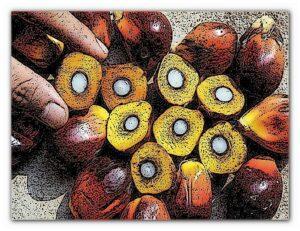 польза вред пальмового масла