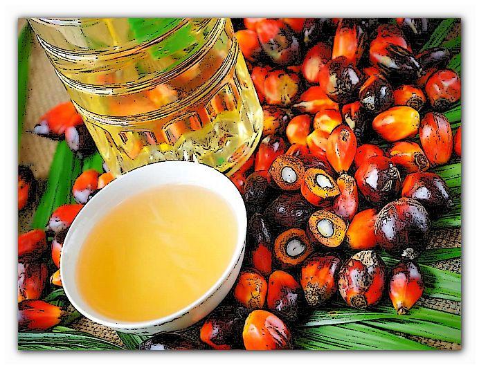 вред польза пальмового масла
