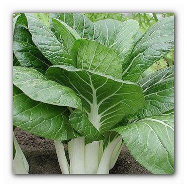 полезная листовая капуста