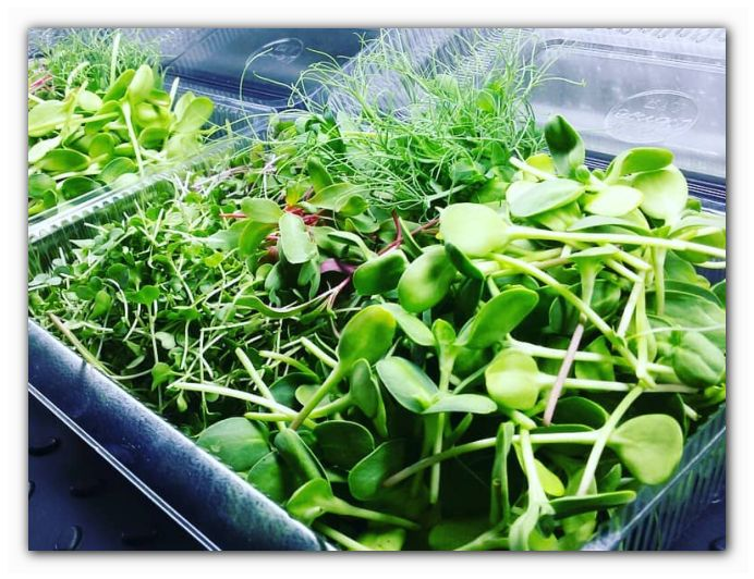 польза микрогринов мини растений