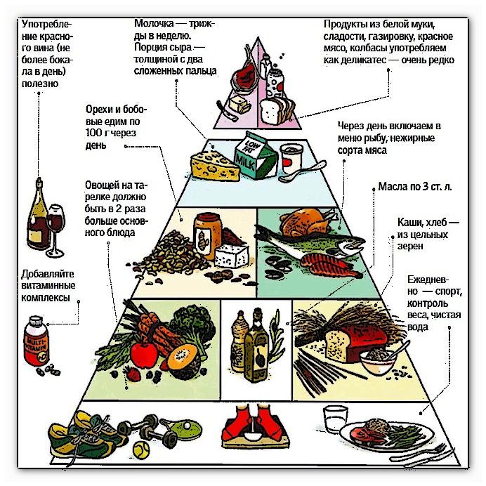 современная пирамида правильного питания
