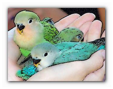 домашние попугаи средние