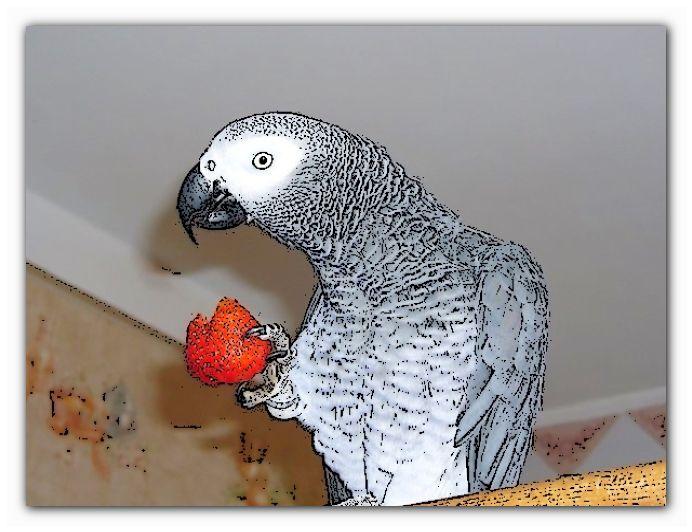 содержание питание попугая