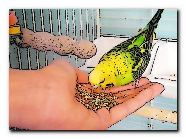 как научить попугая трюкам