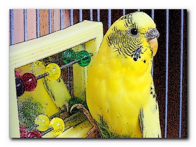 научить попугая трюкам