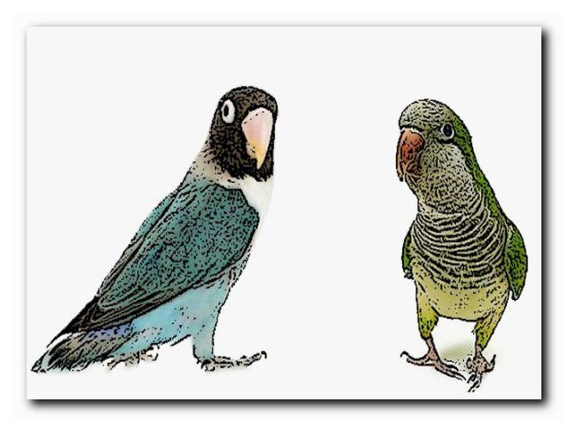 учить попугая трюкам