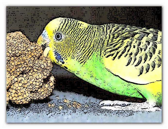 научить попугая не кусаться