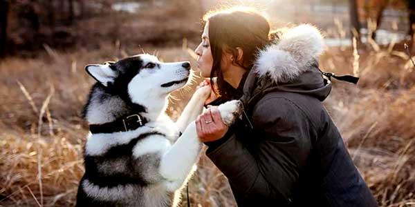 вас любит собака