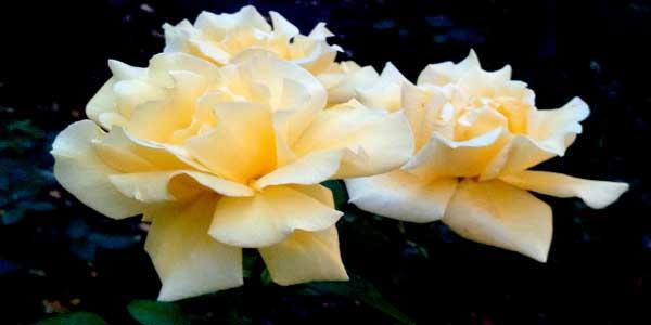 Традиция дарить цветы фото